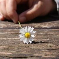 daisy-75190_1280